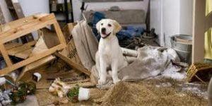 Como ensinar seu cão a obedecer