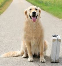 Cuidados com os cães durante e depois das férias