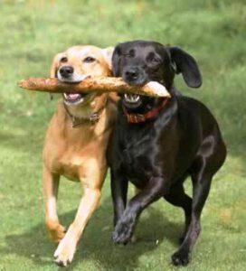 Como socializar seu cão?