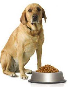 Torção gástrica em cães