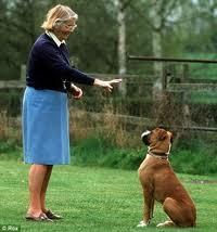 Como domar cães agressivos