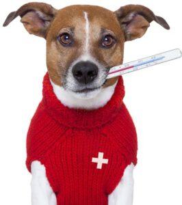 O perigo da pneumonia para os cães