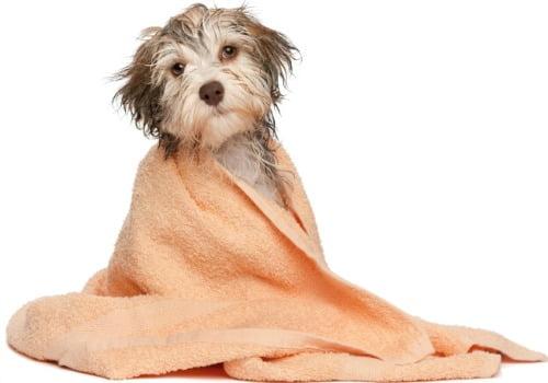 Banho seco: uma boa alternativa para o inverno