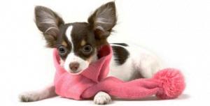As causas das tosses nos cães