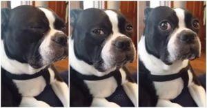 Este cão tem uma reação chocante ao saber que é adotado