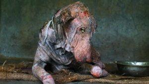 Cão doente é encontrado na rua e tem transformação incrível