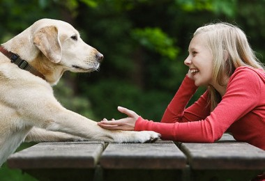 Dog sitting across from girl on picnic table --- Image by © Tetra Images/Corbis