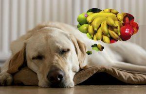 14 Frutas permitidas para cachorros