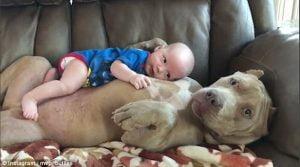 Cão e bebê: assista ao vídeo que encantou milhares de pessoas