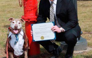 Pit Bull ganha hidrante de prefeito em dia de homenagem