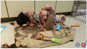 Filhotes usam pijamas para se curarem de doença