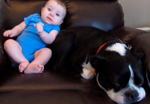 Cãozinho não resiste ao cheiro de uma fralda suja...