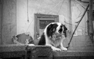 Cachorro latindo muito - O que fazer?