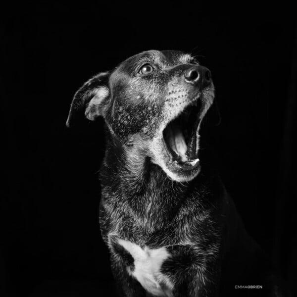 Cães e gatos pretos são mais rejeitados para adoção