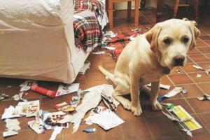 Cães que destroem tudo