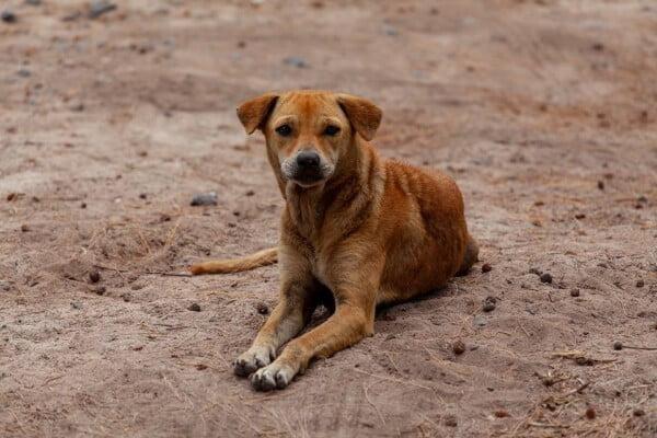 Cachorros abandonados na rua - A importância de adotar