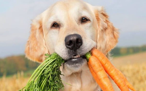 Cachorro pode comer