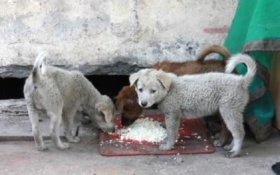 cachorro-pode-comer-arroz