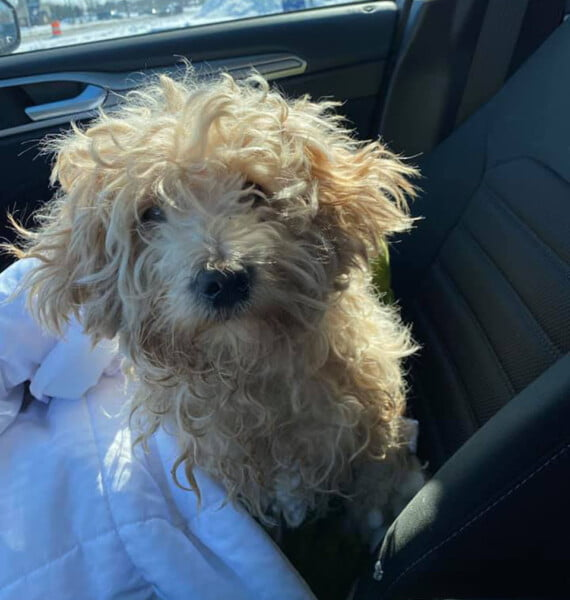Cachorrinho preso em rio por 4 dias é adotado pelo homem que o salvou