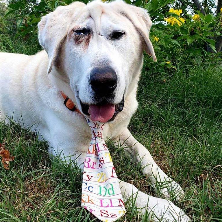 Cachorro abandonado duas vezes por causa da fisionomia encontra uma mãe que o acha lindo