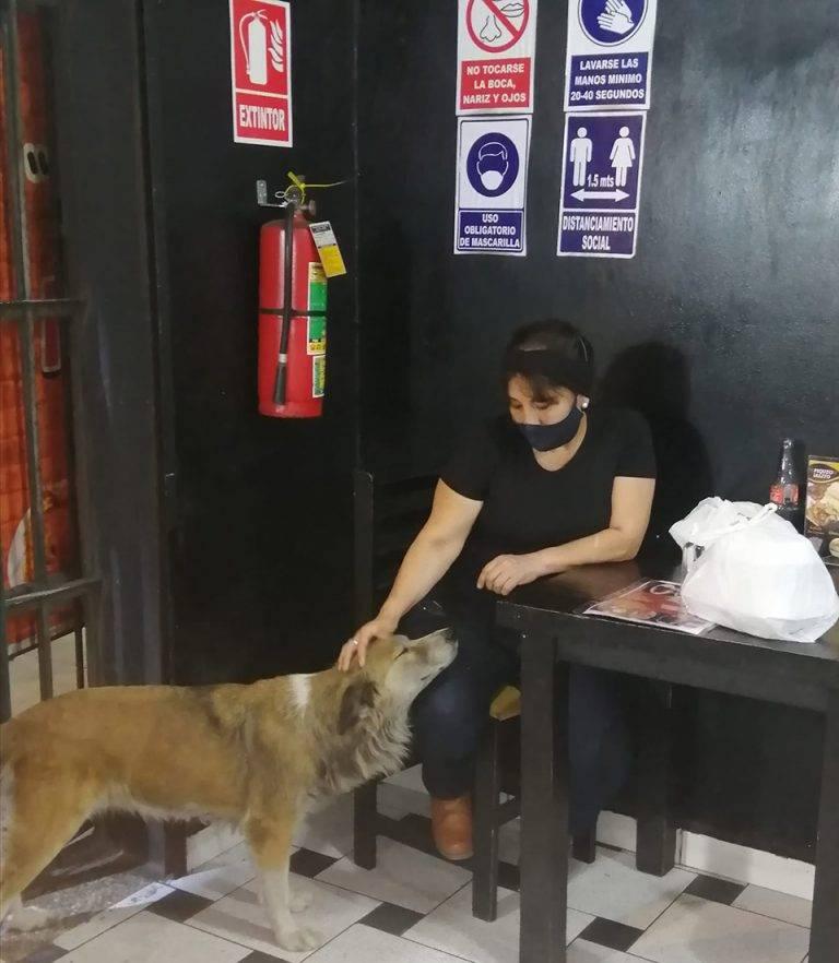 Dono de restaurante serve comida de graça para cães abandonados