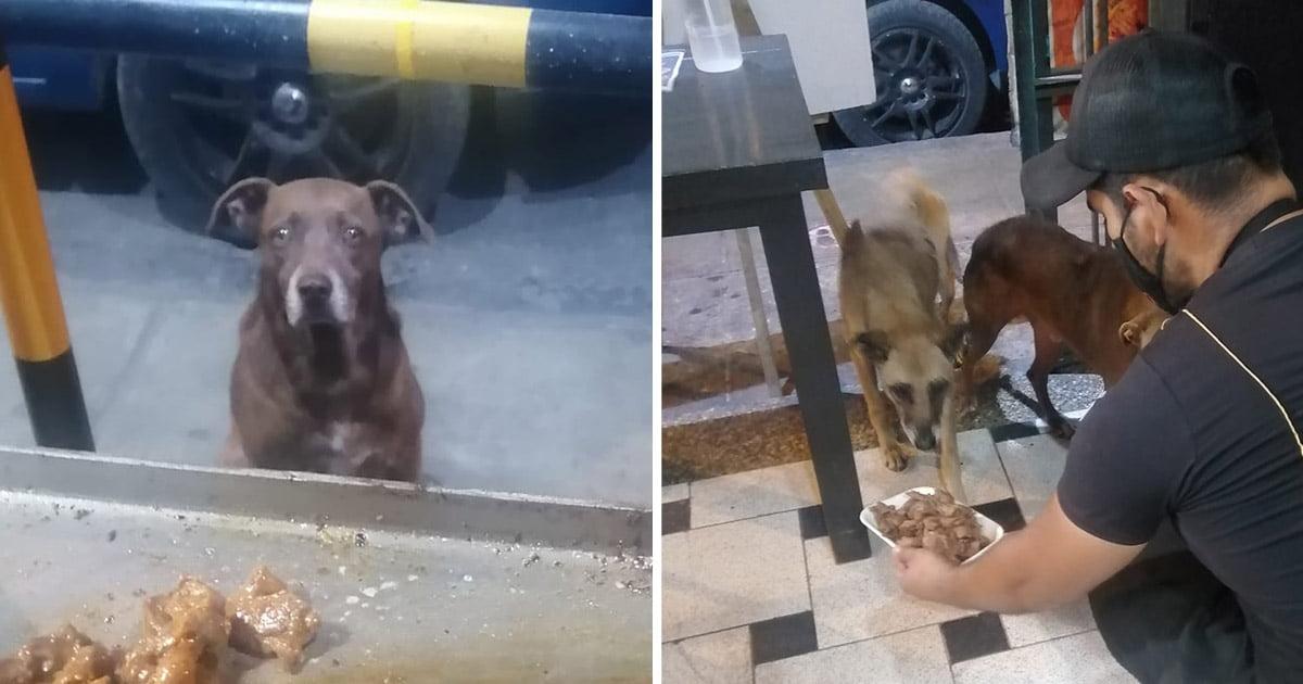 dono de restaurante serve comida de graça para cães