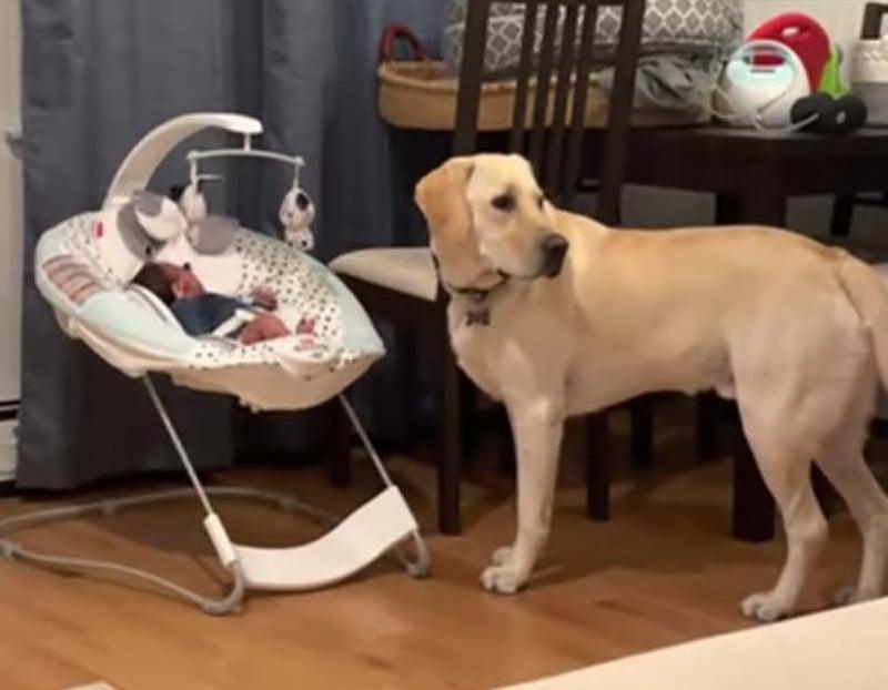 [VÍDEO] Cachorro ouve o bebê chorando e não sai de perto até que ele fique calmo