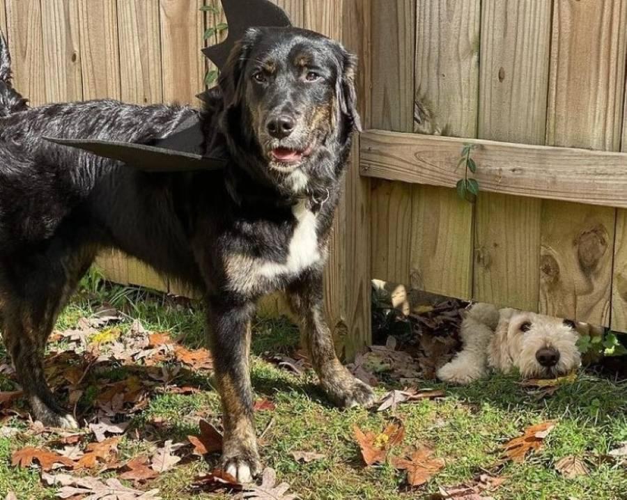 cachorro-fez-tudo-que-podia-para-conhecer-o-vizinho