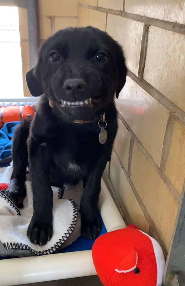 cachorro-procura-familia-e-sorri-para-todos-no-abrigo